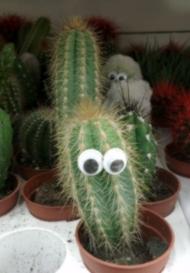 Кактус с глазами