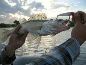 Рыбалки в ноябре